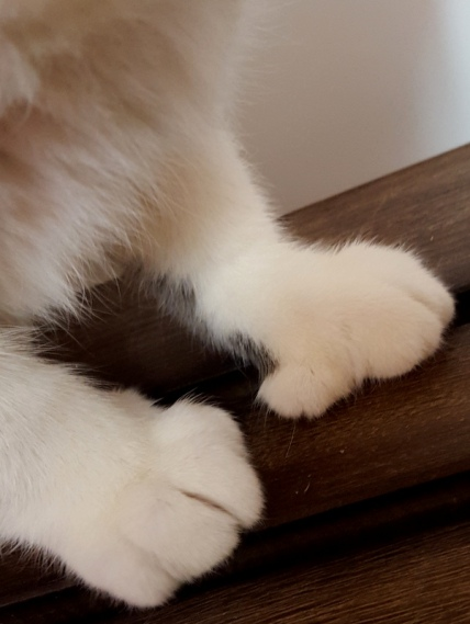Tippy's Cute Feet