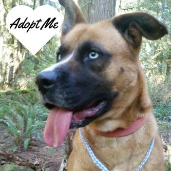 Adopt Me1.jpg