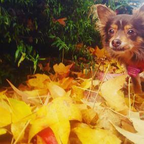 autumntyson