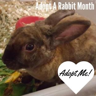 adopt-me