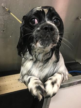 Capone mid bath