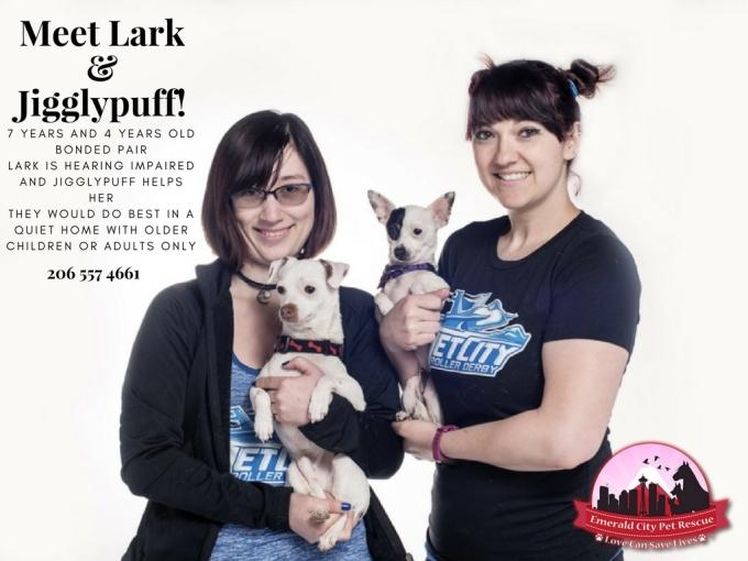 Meet Lark & Jigglypuff! (1)
