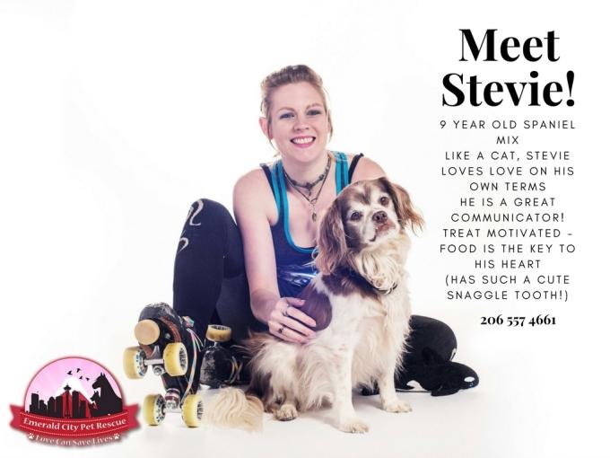 Meet Stevie! (1)